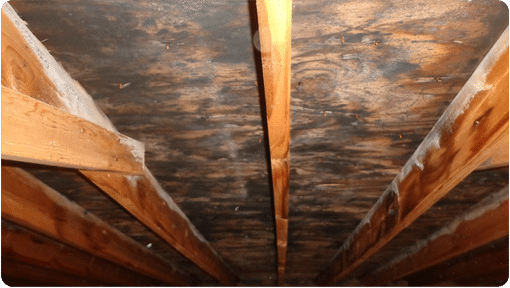 Image of Mold in an Attic