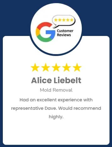 Alice Liebelt Mold Removal Review